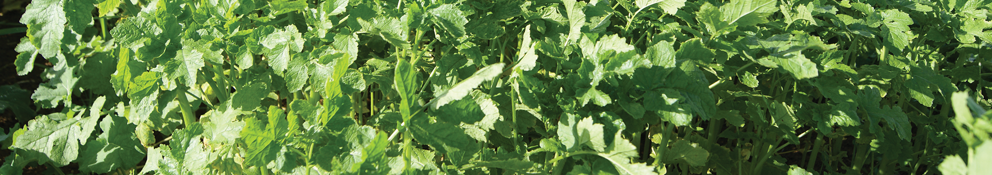 Soil health plants and crops